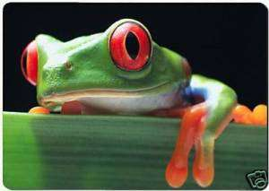 Green frog red eyes fridge magnet.